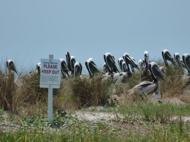 Eric Draper: Good News for Lanark Reef and Other Important Nesting Areas