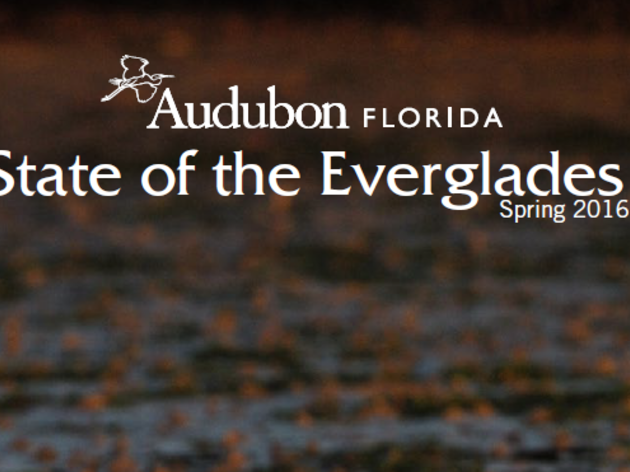 Now Available: Audubon's State of the Everglades Report - Spring 2016