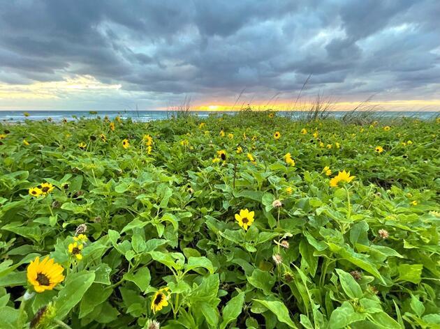 Member Profile: Coastal Native Plant Champion Barbara Stoia Meister