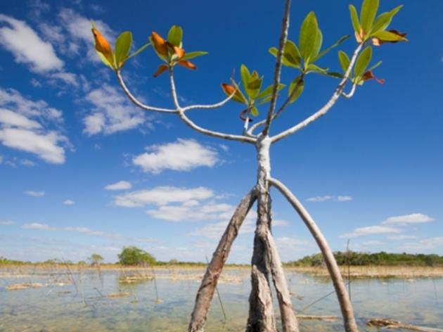 Good News for Broward County Water Preserve Areas and Biscayne Bay Coastal Wetlands Projects