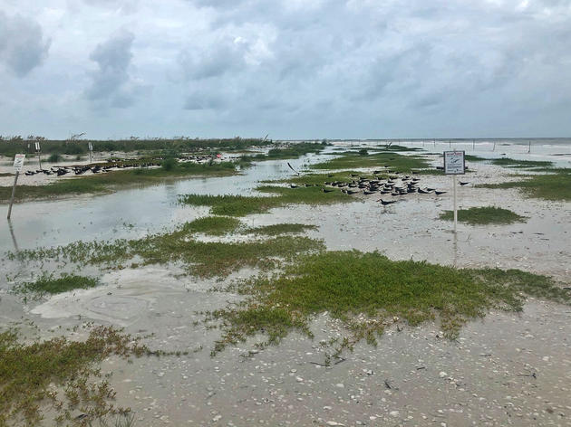 Tropical Storm Cristobal Swamps Sea and Shorebird Nests