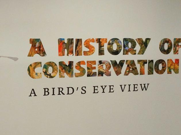 A History of Conservation: Tampa Exhibit Highlights Audubon's Legacy in Florida's Conservation Movement