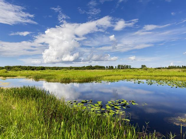 Everglades Program Webinars