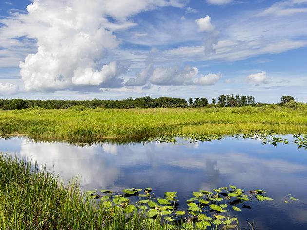 Exciting News for the Loxahatchee National Wildlife Refuge