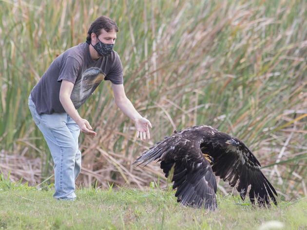 A Look into Baby Season at Audubon Center for Birds of Prey