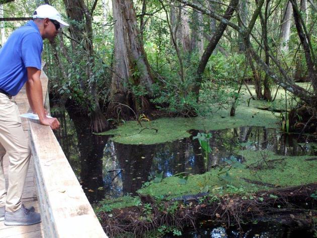 Audubon's Corkscrew Swamp Sanctuary Reopens Hurricane Irma-damaged Section of Boardwalk