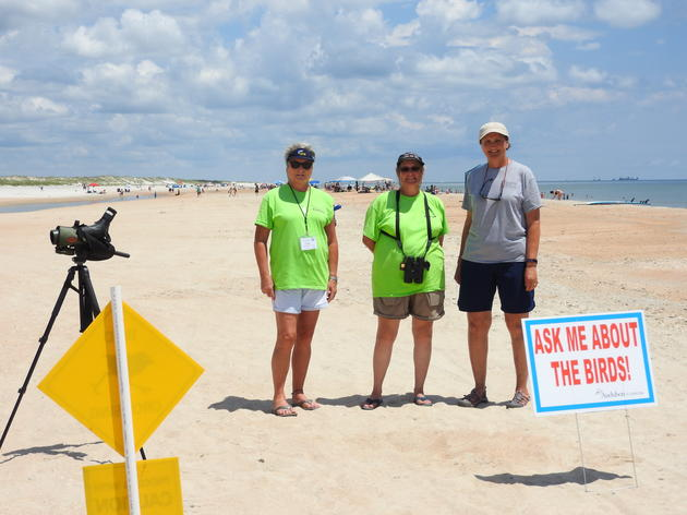 Anastasia State Park's Least Tern Colonies Show Early Success Despite Challenges