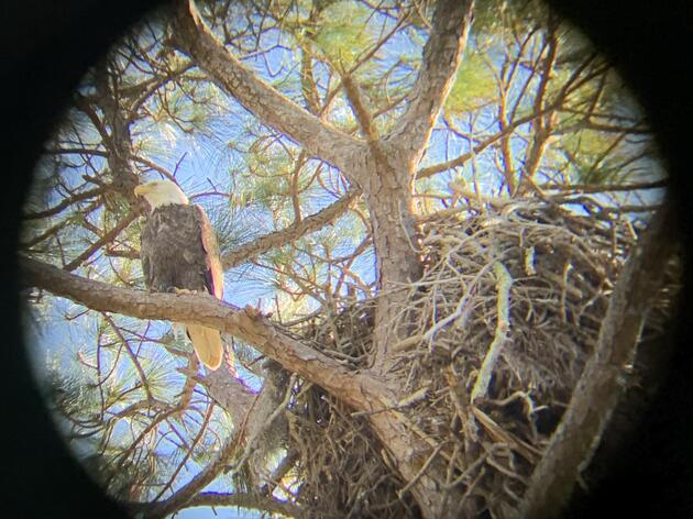CLI Student Collects Important Bald Eagle Data in Northwest Florida