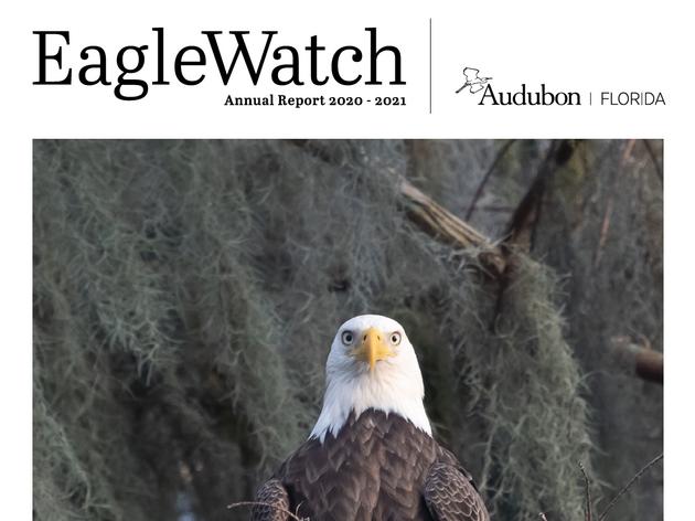 Audubon Florida Releases 2020-2021 EagleWatch Report