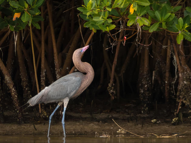 Important Audubon-Championed Everglades Reservoir Passes State and Federal Hurdles