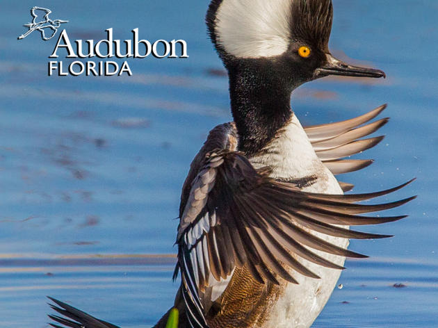 Spring 2017 Update from Audubon Florida Executive Director Eric Draper