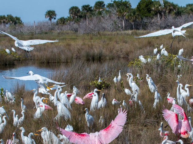 Wading Bird Supercolonies in America's Everglades Tell Us Something We Already Knew