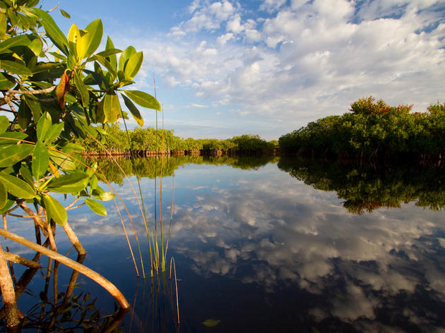 Audubon-Championed Everglades Reservoir Passes State and Federal Hurdles!