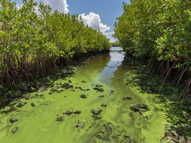 Now What? Blue-Green Algae and Red Tide Leave Floridians Frustrated