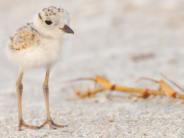 Audubon in Action: Fighting for Critical Habitat in Southwest Florida