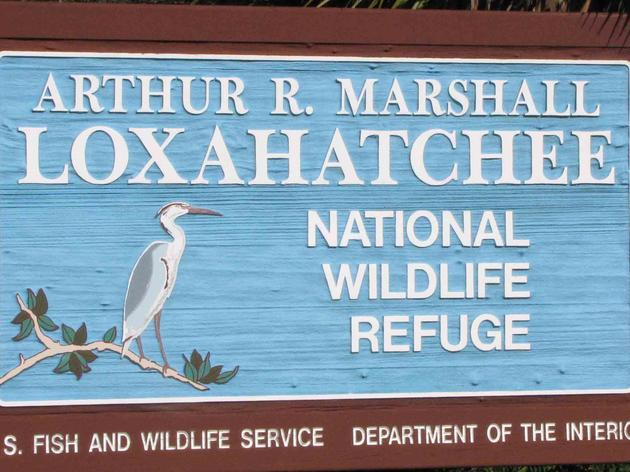 Audubon Advocates and Partners Save the Arthur R. Marshall Loxahatchee National Wildlife Refuge