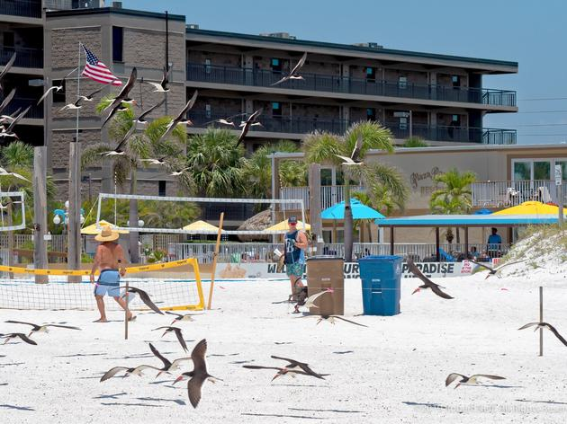 Beach Volleyball Tournament Host Goes to the Net – for Florida's Beach-nesting Birds!