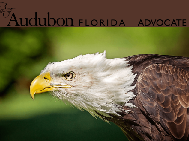 Audubon Advocate: Lawmakers Convene in Tallahassee