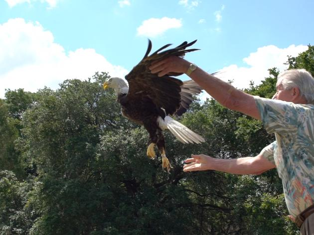 Earth Day Special: Audubon Releases its 540th Rehabilitated Bald Eagle Back to the Wild