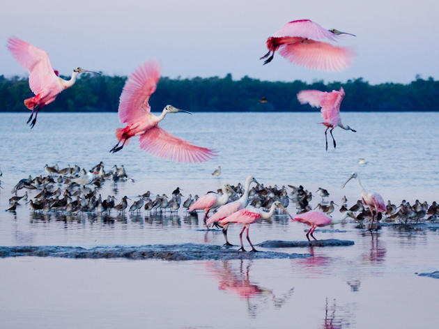 America's Bird Species Threatened by Global Warming 'Gut Punch,' New Audubon Study Reveals