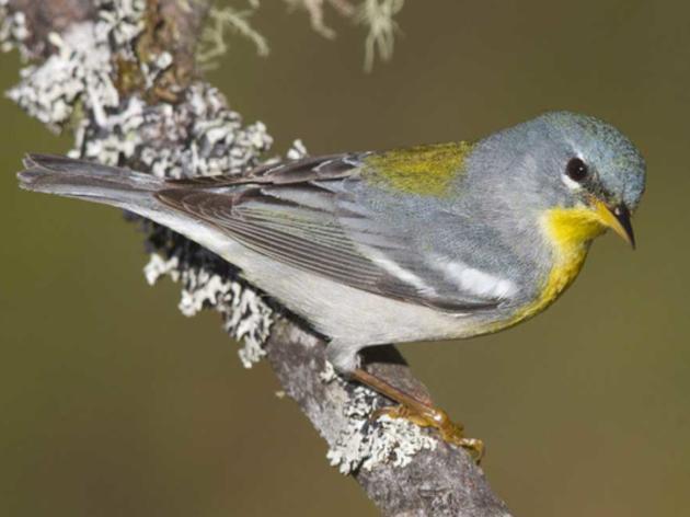 Audubon Florida's Julie Wraithmell Promoted to Deputy Executive Director
