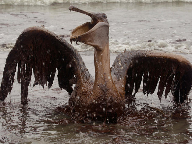 STATEMENT: Audubon Florida Slams Move to Consider Florida's Coasts for Offshore Drilling