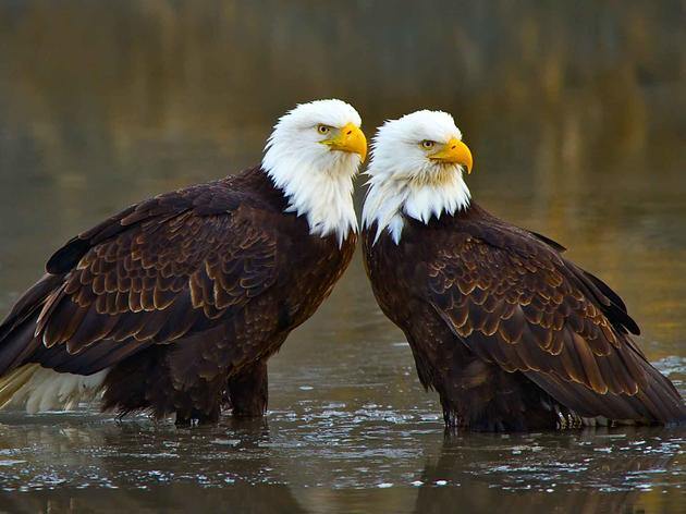 Audubon Florida Announces New Legislative and Policy Staff