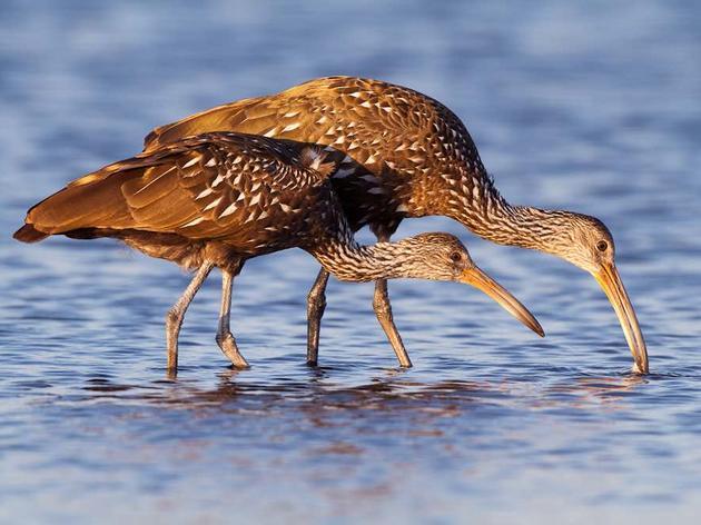 Audubon Florida Praises Gov. DeSantis' Environmental Budget Recommendations for Water