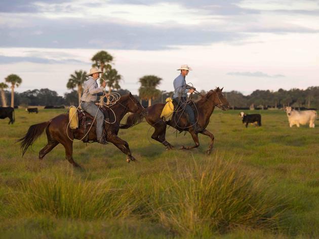Audubon Florida Presents Sustainable Rancher Award to Buck Island Ranch