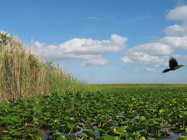 State Dept. of Environmental Protection Requests Historic Investments in America's Everglades