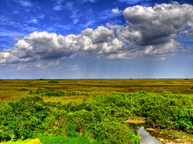 Climate Change and the Everglades
