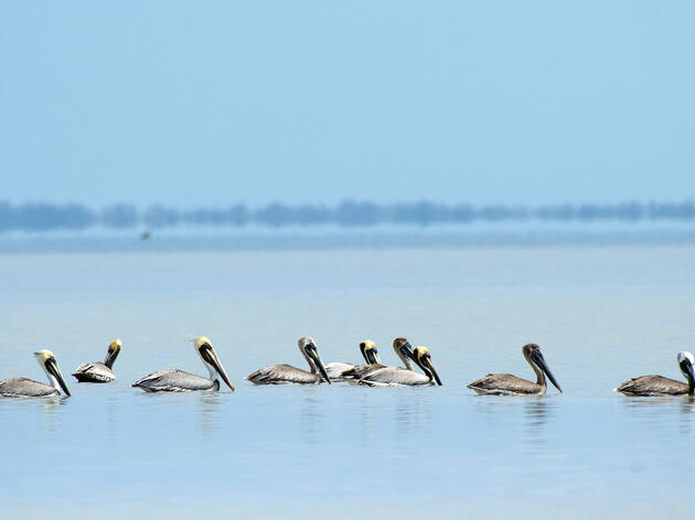 Serving on Technical Committees Helps Audubon Influence Water Conservation in Florida
