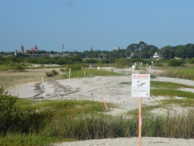 City of St. Augustine helps make bird stewarding a reality at Julia's Island