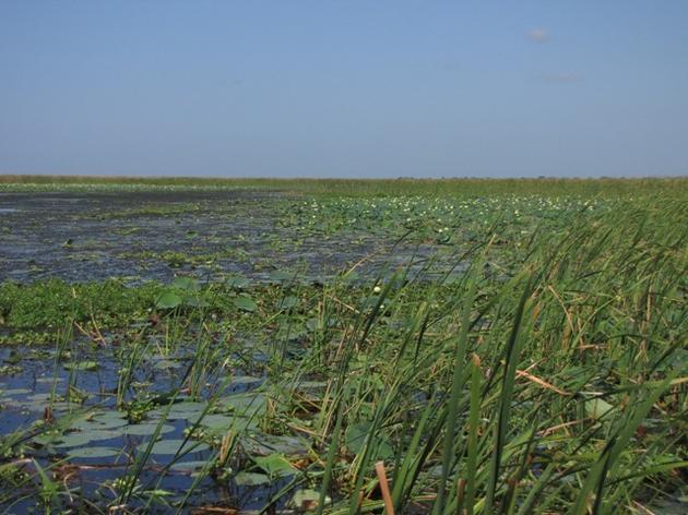 Audubon's Eric Draper Issues Statement on the Passage of SB 552