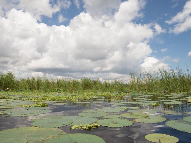 High Water Levels Threaten the Health of Lake Okeechobee