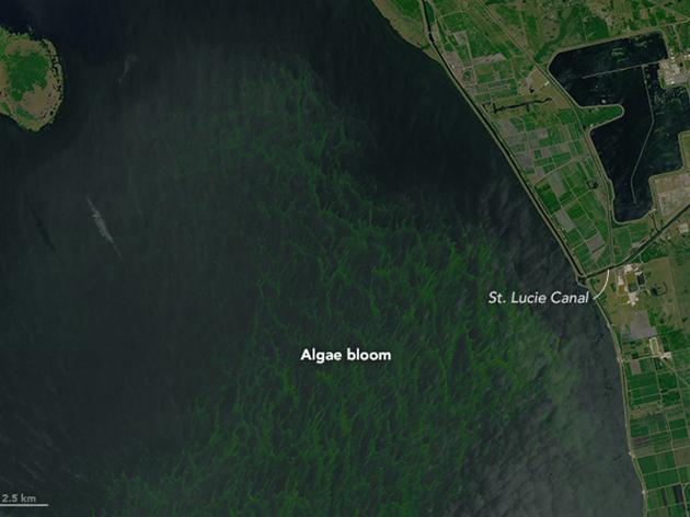 Coastal Water Crisis Update - July 8, 2016