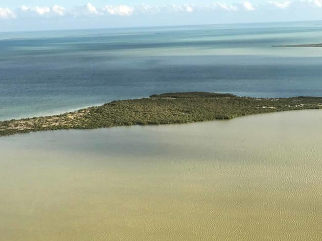 More Freshwater (Not Less) Needed to Curb Algal Blooms in Florida Bay