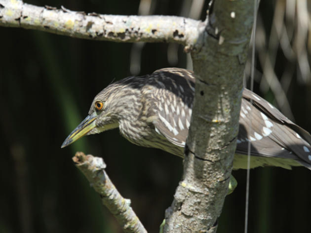 Read Audubon Florida's 2017 Conservation Action Agenda