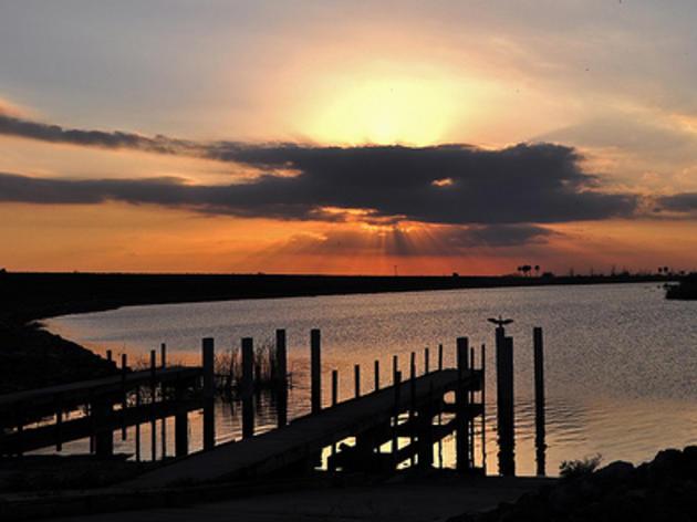 Audubon Applauds Rep. Altman for Filing Bill to Protect Florida's Coastal Waters