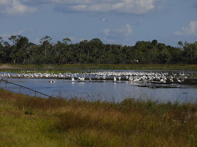 Nutrient Source Reductions Needed to Improve Picayune Strand Water Flows