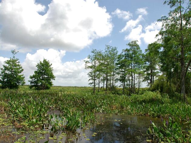 Publix and SeaWorld Invest in Restoring Corkscrew Swamp Sanctuary's Wetland of International Significance