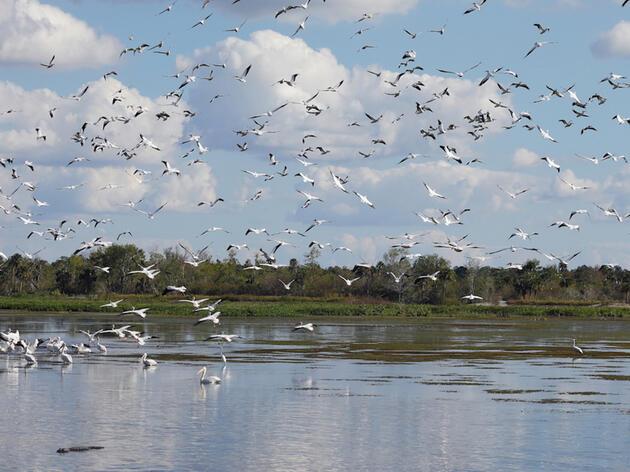 Audubon Celebrates Early Restoration Phase for Picayune Strand Urged by Big Cypress Basin
