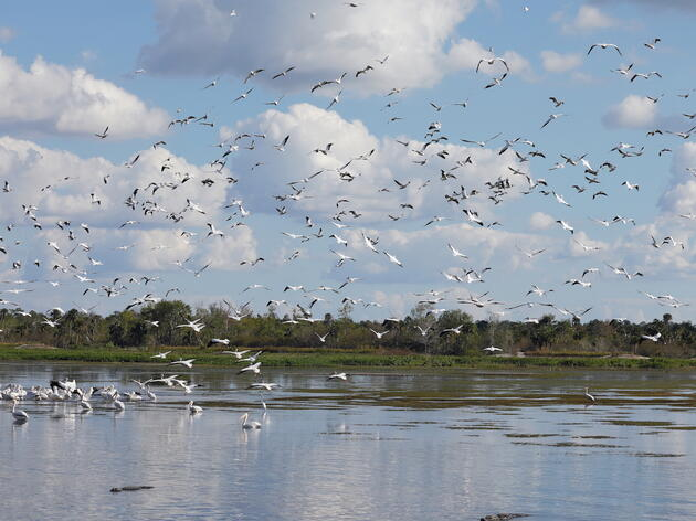Southwest Florida's Picayune Strand Restoration Project Sees Final Phase Construction Start