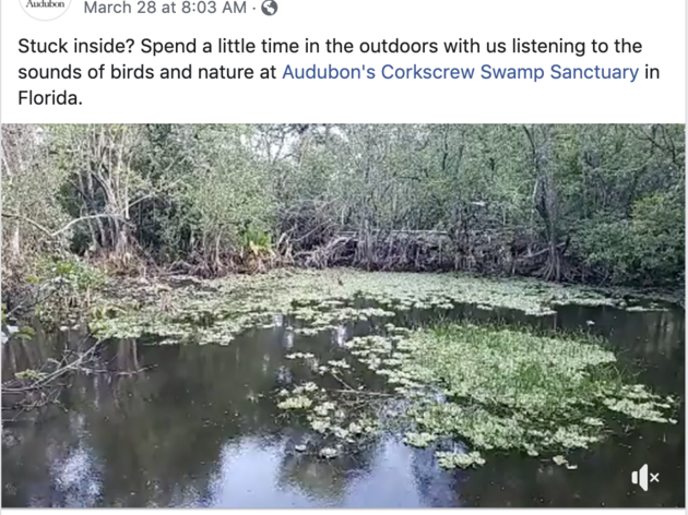 Corkscrew Swamp Sanctuary Streams Worldwide Via Facebook Live