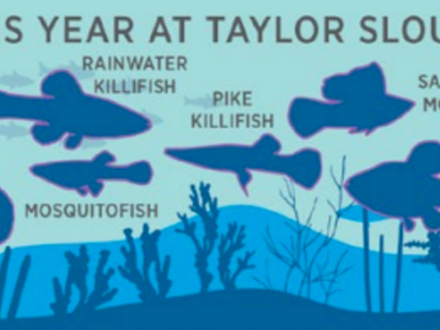 2020 Sampling of Florida Bay Fish Reveal Improving Everglades Water Conditions