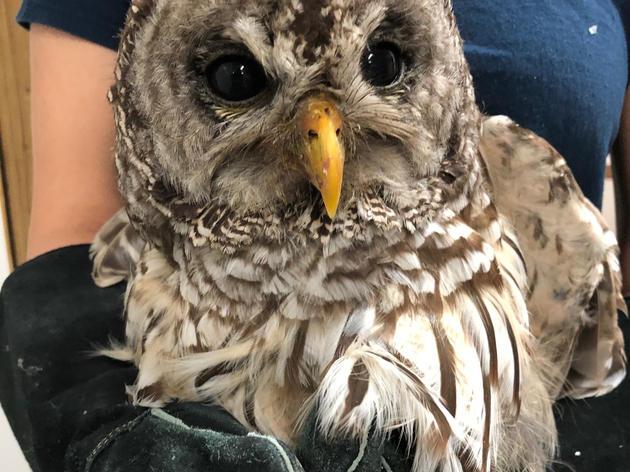 A Shocking Owl Story