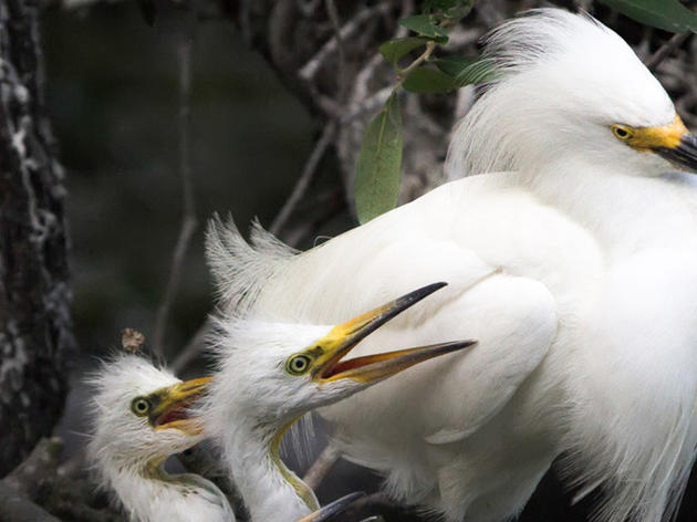 Bird Rookery Island Cleaners Help Prepare for Annual Nesting Season