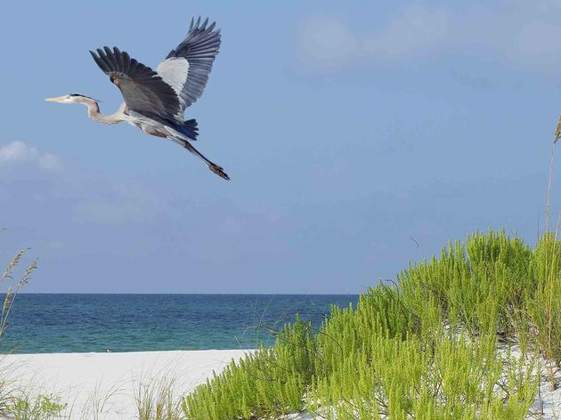Coastal Barrier Resources Act Protects Taxpayers and Coastal Habitats