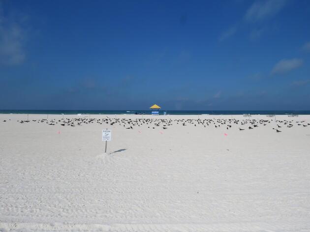 Audubon Coastal Stewardship Sites: Tampa Bay Region