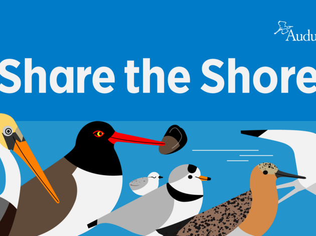 Protect Beach-nesting Birds from Fireworks this July Fourth Weekend